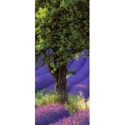 lavande_arbre_vertical_pano