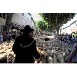 Transhumance à St-Rémy de Provence