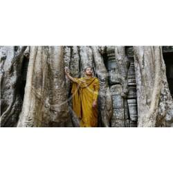 Angkor - Ta Prohm