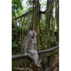 Bali_0378