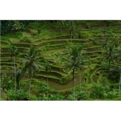Bali_0614