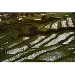 Bali_01255