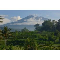 Bali_0741