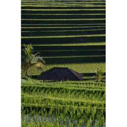 Bali_01270