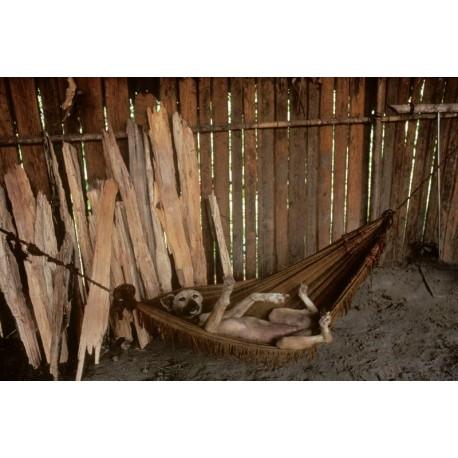 Vénézuela Amazonie chien2