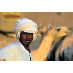 Egypte chamelier