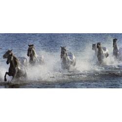 Panoramique de chevaux_dans_l_eau