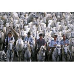 chevaux_roussataio