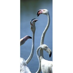 flamants_cous_vertical